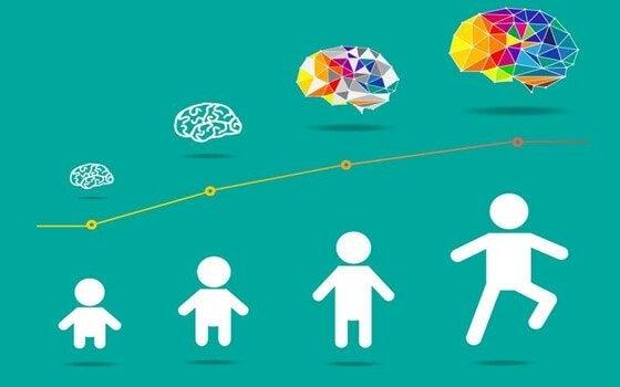 barns hjerne utvikling