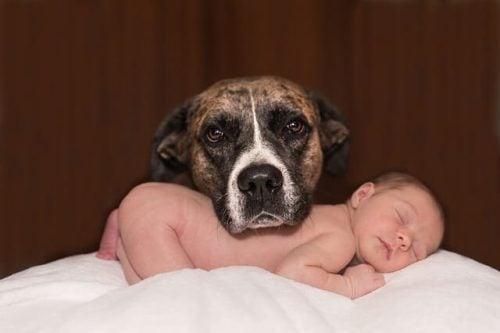 Hund beskytter baby