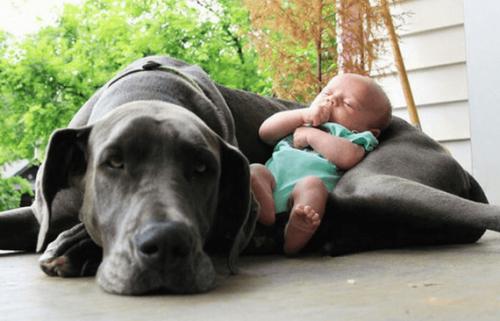 Hvordan forberede kjæledyr på en baby i huset