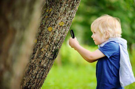 En gutt som undersøker et tre.