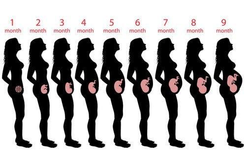 hvor mange uker går man gravid