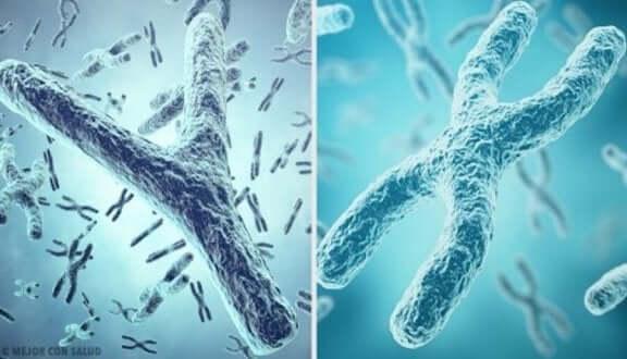 Y-kromosom