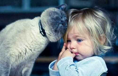 Velg de beste kjæledyrene for barn