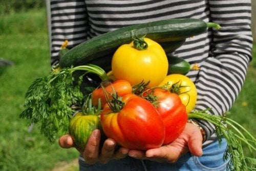 Vegetarisk kosthold.