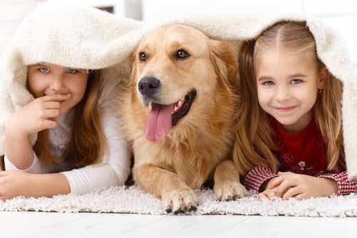 Kjæledyr: Hvorfor er barn så tiltrukket av dyr?