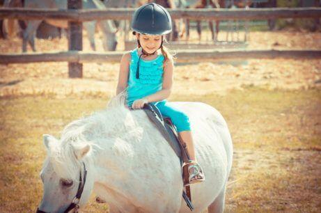 Hester er gode terapidyr