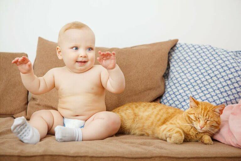 Er det greit for nyfødte å bo med kjæledyr?