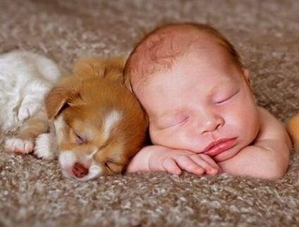 Er det greit for nyfødte å leve med kjæledyr?