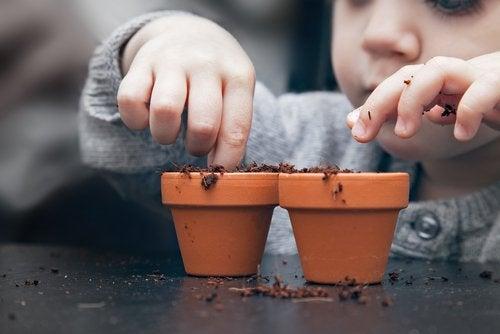 Prøv å dyrke et frukttre fra frø med barna dine