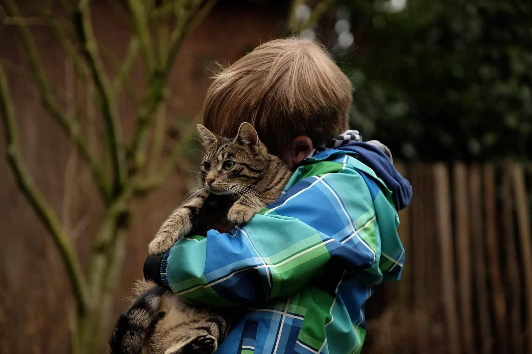 gutt holder katt